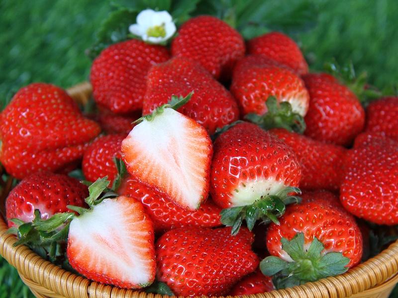 台中草莓世界‧採果教學農場